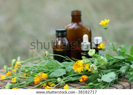 calendula flowers essential oil and tincture.