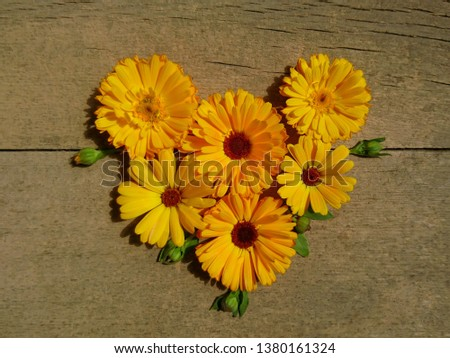 Calendula heart. Marigold flower & bud htop view on wooden background. Calendula cup (Marigold flower) heart natural flower. Calendula officinalis summer medicinal herb plant heart - healthy concept