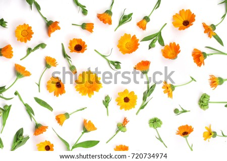 Calendula. Marigold flower isolated on white background with copy space for your text. Top view