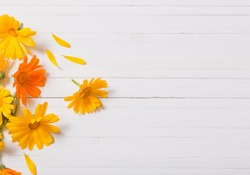 Calendula (Marigold) herbal tea  on white wooden table