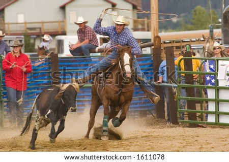 calf roping event at rodeo (editorial use only)