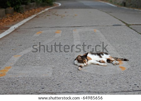 Calico cat lay