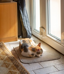 Calico cat sleeps on a rug near the door at home