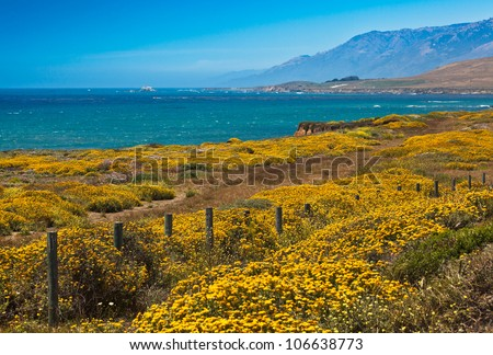 California Coast and Flowers, California USA