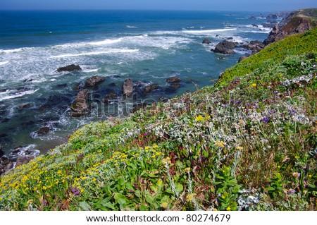 California Coast in June:  Spring wildflowers decorate the rocky coast of California near Bodega Bay.