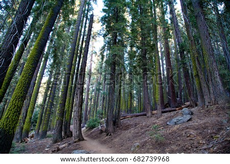 California forest