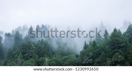 California Mendocino Misty Trees #1230992650