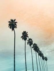 California orange and blue sunset with palm trees