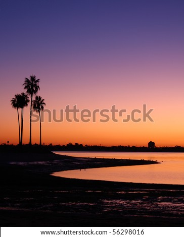 California Palm Trees and Sunset at Mission Bay San Diego, California