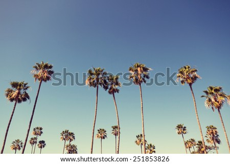 California palm trees in vintage style. #251853826