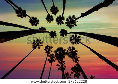 California Palm trees view from below in Santa Barbara US [photo illustration] #175622228