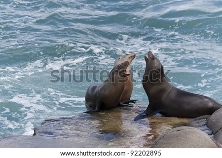 California Sea Lions on the rocks at La Jolla Cove, San Diego, California