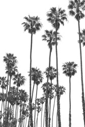 California State palm tree. Summer vacation, tropical beach concept