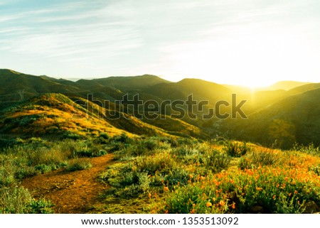 California Super Bloom #1353513092