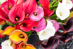 Calla lily flowers in full bloom on display at the farmers market