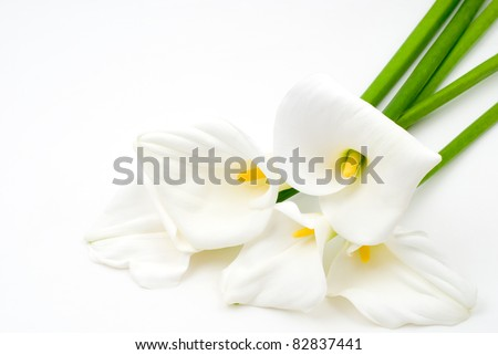 Calla lily on a white background