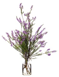 Calluna vulgaris (common heather, ling, or heather) in a glass vessel with water