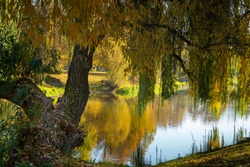 Calm autumn river with reflections of trees with colorful foliage viewed past a osiers branches and leaves