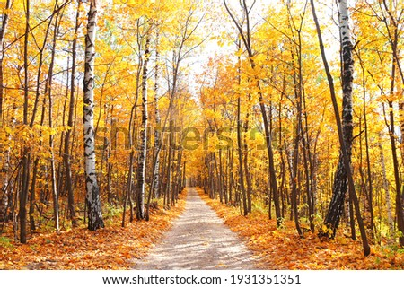 Calm fall season. Beautiful landscape with road in autumn forest. Maples and birch trees with green, yellow and orange leaves and footpath in the woodland in sunny day Photo stock ©