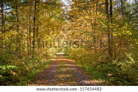 Calm path in the autumn forest