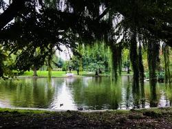 Calm pond in the Park located in Boston City.