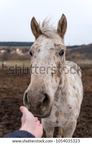Calming the horse.  #1054035323