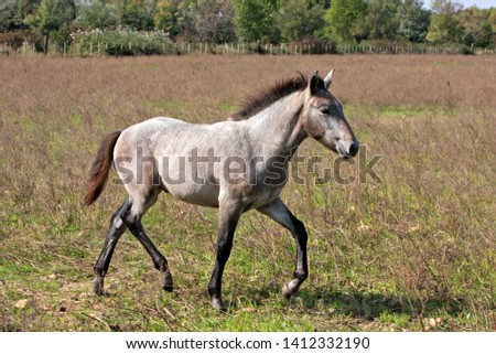 Camargue Horse female with young #1412332190