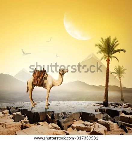 Camel and birds under moon near pyramids.Elements of this image furnished by NASA