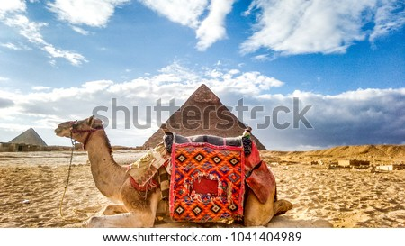 Camel at Giza Pyramids #1041404989