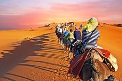 Camel caravan going through the desert in Morocco Africa at sunset