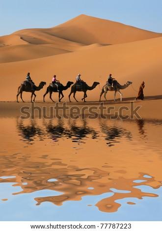 Camel caravan going through the sand dunes in the Sahara Desert, Morocco.
