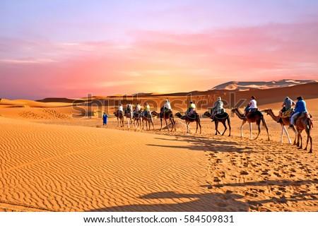 Camel caravan going through the sand dunes in the Sahara Desert, Morocco at sunset