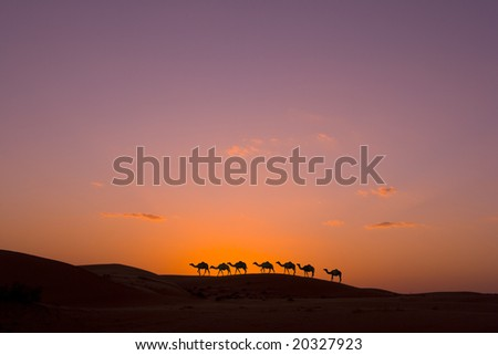 camel caravan in the desert - stock photo