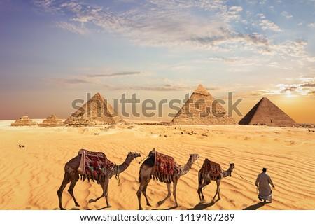 Camel caravan near the Great Pyramids of Giza in Egypt #1419487289