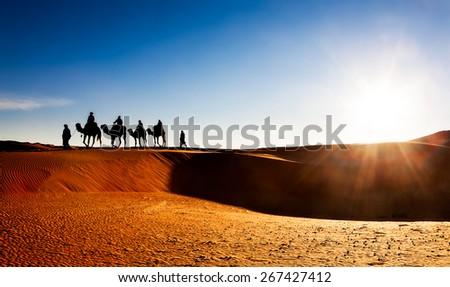 Camel caravan on sand dunes in the desert at sunrise. Erg Chebbi, Morocco, Africa.