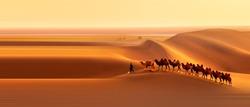Camel crossing in the desert
