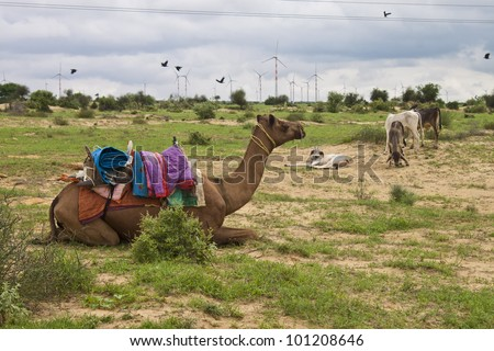 Camel, donkeys and wind power plants at Thar desert in Rajasthan, India - stock photo