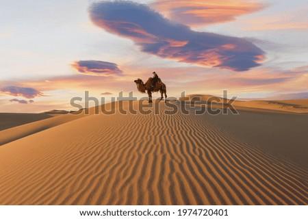 Camel going through the sand dunes on sunrise, Gobi desert Mongolia Stock fotó ©