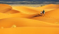 Camel in Sahara Desert, Africa