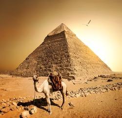 Camel in sandy desert near mountains at sunset.