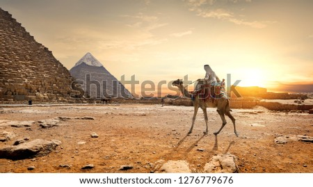 Camel in sandy desert near mountains at sunset #1276779676