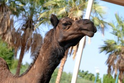 camel in the zoo beautiful lovely day