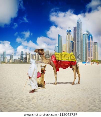 Camel on Dubai Beach, United Arab Emirates
