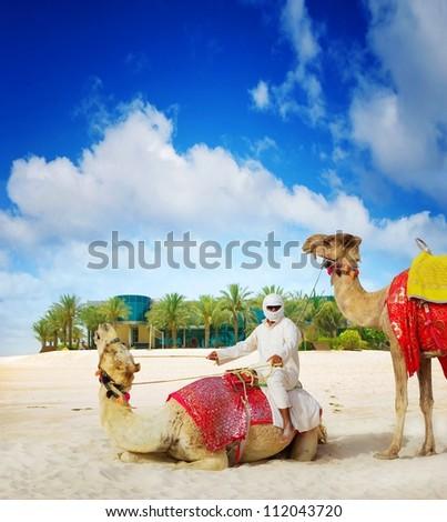 Camel on Dubai Island Beach, United Arab Emirates