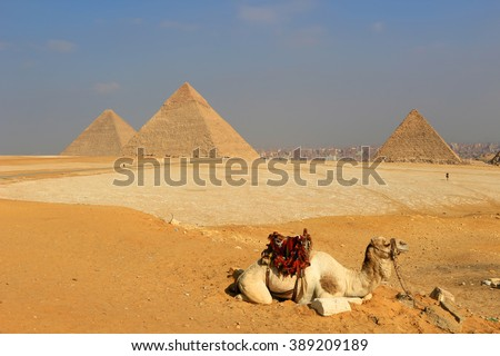 Camel relaxing at The Pyramids of Giza, man-made structures from Ancient Egypt in the golden sands of the desert with polluted Cairo in the background  #389209189