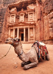Camel resting in front of main temple (Al-Khazneh - Treasury) at Petra, Jordan. Animals are used to ride tourists