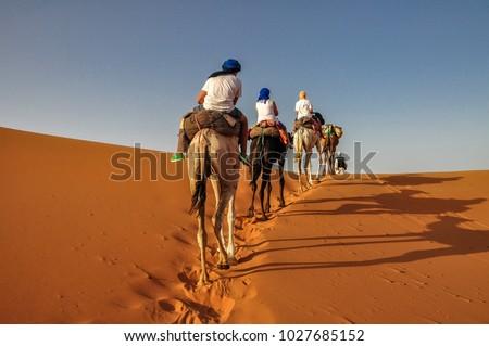 Camel ride at Erg Chebbi - Sahara desert - Morocco