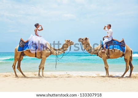 camel ride on wedding day