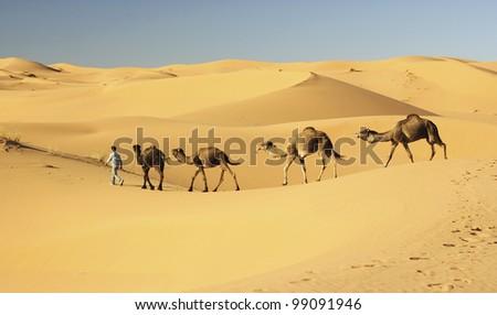 Camel's caravan in the Sahara desert