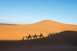 Camel shadow on the sand dune in Sahara Desert